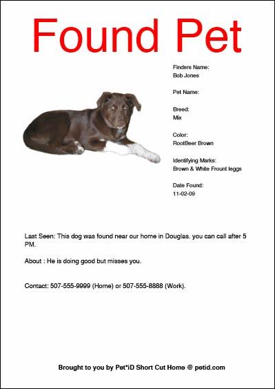 found dog flyer